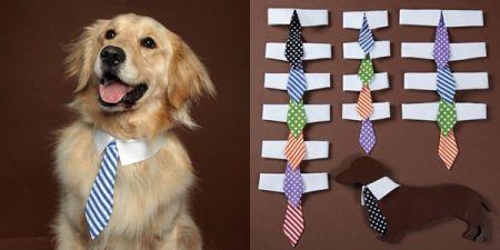 Dog Tie.jpg