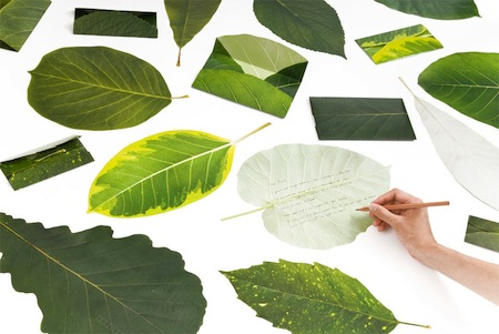 Leaves Stationary1.jpg