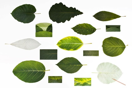 Leaves Stationary2.jpg